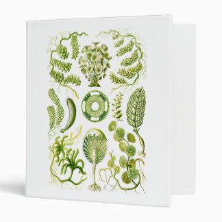 "Algas verdes carpeta 1"""