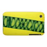 Algas verdes de Spirogyra Funda Bareyly There Para iPhone 3 De Case-Mate