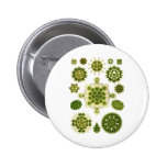 Algas verdes pin