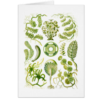 Algas verdes tarjeta de felicitación