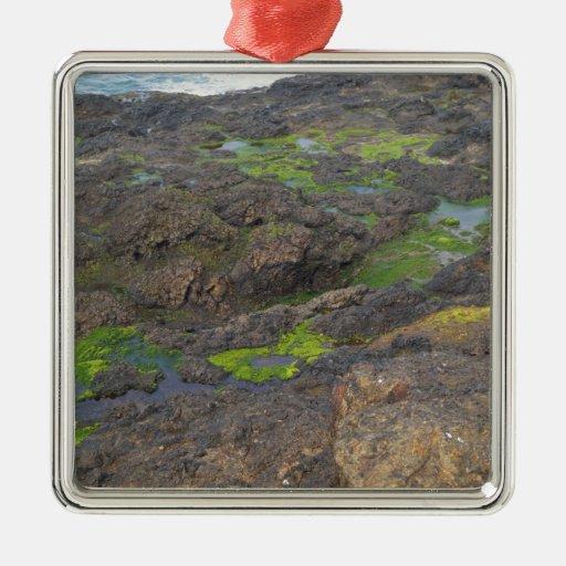 algas verdes y piscinas de la marea en rocas adorno de reyes