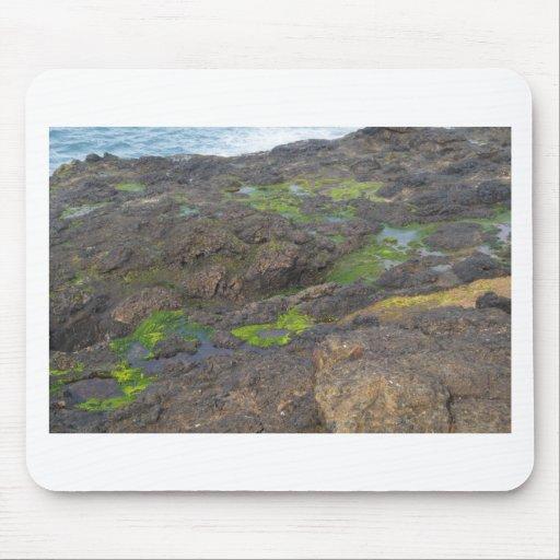 algas verdes y piscinas de la marea en rocas tapetes de ratón