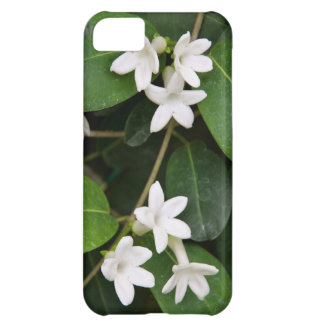 Algerian Ivy Case-Mate iPhone 5 Barely There Unive Case For iPhone 5C