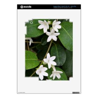 Algerian Ivy iPad 3 (Wi-Fi/Wi-Fi + 4G LTE) Skin iPad 3 Decals