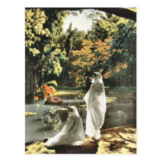 Algier, Jardin d'essai Postcard
