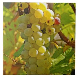 Algo de Chasselas en el viñedo - plantado de largo Azulejo Cuadrado Grande
