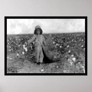 Algodón de la cosecha del muchacho en Comanche, AU Impresiones