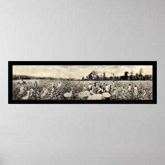 Algodón mil millones fotos 1915 de la cosecha del  poster