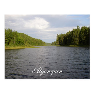 Algonquin Beauty Postcard