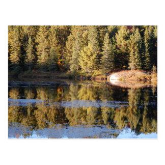 Algonquin Landscape Postcard