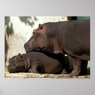 Alguien para vigilar mí el retrato del Hippopotamu Póster