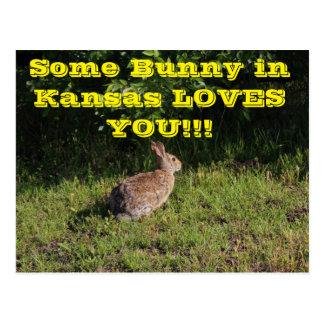 Algún conejito en Kansas le ama postal