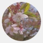 Algunas flores de cerezo pegatina redonda