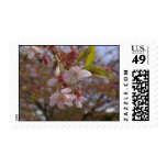 Algunas flores de cerezo sello