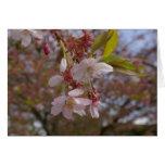 Algunas flores de cerezo tarjeta pequeña