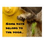 Algunos días pertenecen a los perros… postales