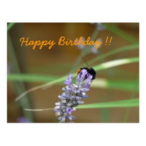 Alhucema con abejorro tarjeta de cumpleaños tarjetas postales