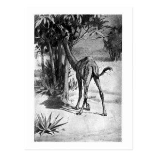Alice B. Woodward: Altecamelus art poscard Postcard