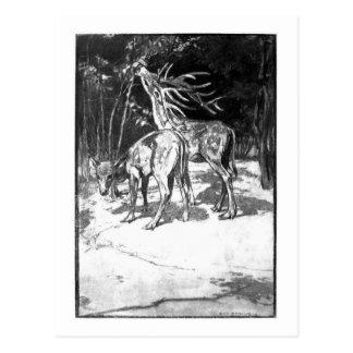 Alice B. Woodward: Cervus sedgwicki art postcard