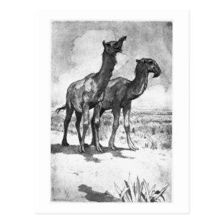 Alice B. Woodward: Macrauchenia art postcard