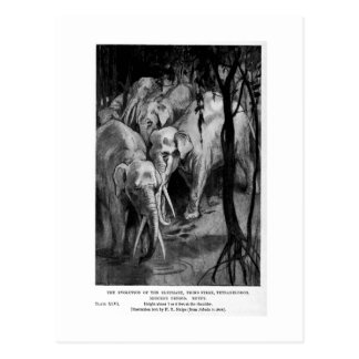 Alice B. Woodward: Tetrabelodon art postcard
