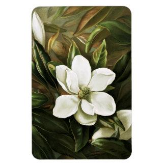 Alicia H Laird Magnolia Grandflora Imanes Rectangulares