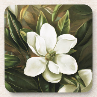 Alicia H Laird Magnolia Grandflora Posavaso