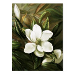 Alicia H. Laird: Magnolia Grandflora Postales