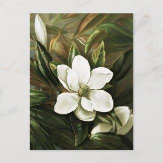 Alicia H. Laird: Magnolia Grandflora