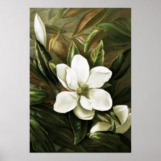 Alicia H. Laird: Magnolia Grandflora Poster