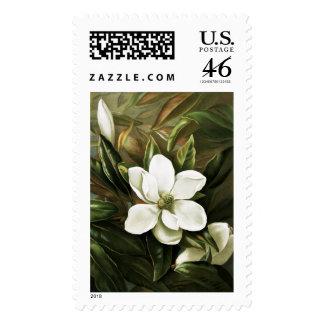 Alicia H Laird Magnolia Grandflora