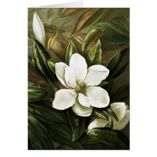 Alicia H Laird Magnolia Grandflora Tarjetón