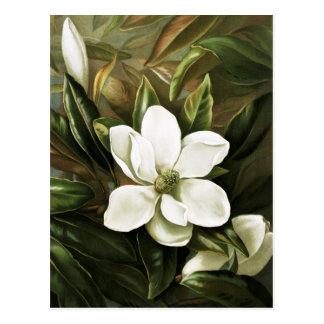 Alicia H Laird Magnolia Grandflora Postales