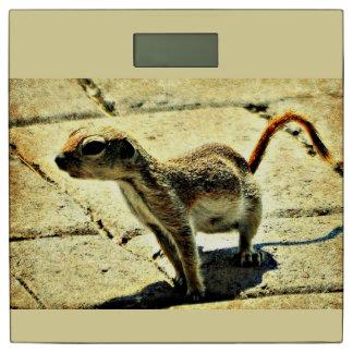 """""""Alien"""" Ground Squirrel Bath Scale"""