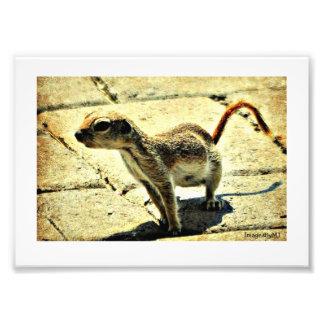 Alien Ground Squirrel  Photo Print