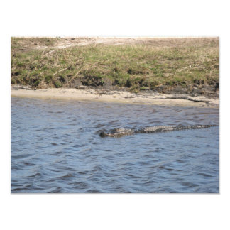 Aligator in the Water Photo