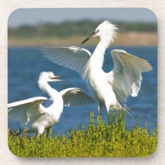 Alimentación adulta rojiza del Egret (Egretta Posavasos De Bebidas