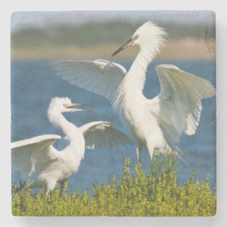 Alimentación adulta rojiza del Egret (Egretta Posavasos De Piedra