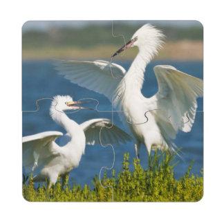 Alimentación adulta rojiza del Egret (Egretta Posavasos De Puzzle