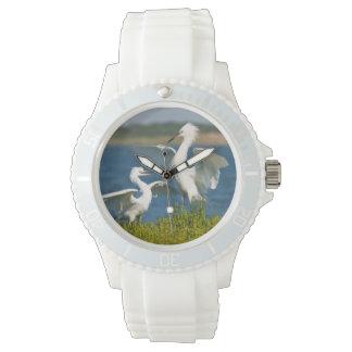 Alimentación adulta rojiza del Egret (Egretta Reloj