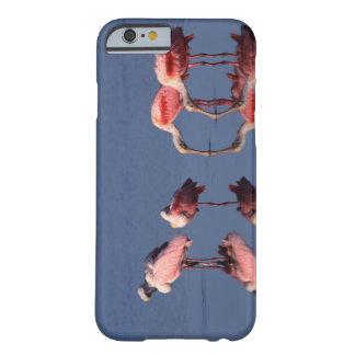 Alimentación de cinco Spoonbills rosados (ajaja Funda De iPhone 6 Barely There
