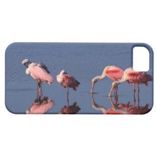 Alimentación de cinco Spoonbills rosados (ajaja iPhone 5 Fundas
