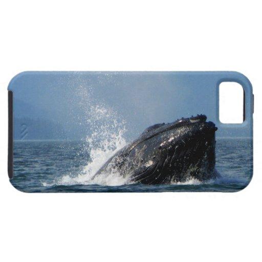 Alimentación de la ballena jorobada funda para iPhone SE/5/5s