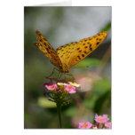 Alimentación de la mariposa felicitación