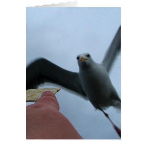 Alimentación de las gaviotas tarjeta de felicitación