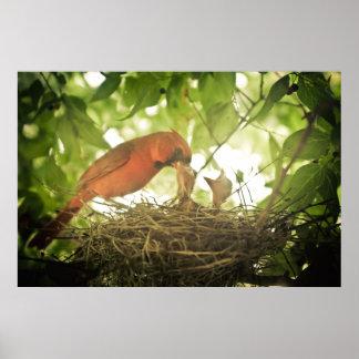 Alimentación de los cardenales poster