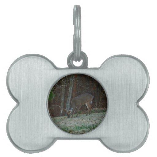 Alimentación de los ciervos del macho de Young Buc Placas Mascota