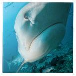 Alimentación del tiburón del tiburón de tigre (Gal Azulejos Ceramicos