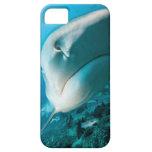 Alimentación del tiburón del tiburón de tigre (Gal iPhone 5 Coberturas