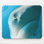 Alimentación del tiburón del tiburón de tigre mouse pad